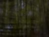 world-pinhole-day2013-ritchy-pop-lainzer-tiergarten-9892
