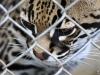 2013-05-10-02-reserva-de-rescate-zoo-181