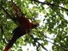 2013-05-10-02-reserva-de-rescate-zoo-231