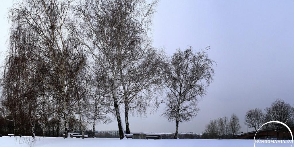 winter auf der donauinsel