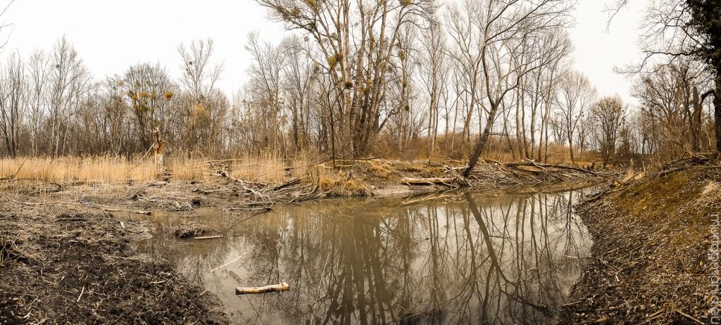 krebsenwasser - wo sind die krebse